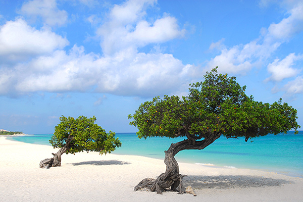 San Francisco CA USA (SFO) – Aruba (AUA) from $318 Round Trip